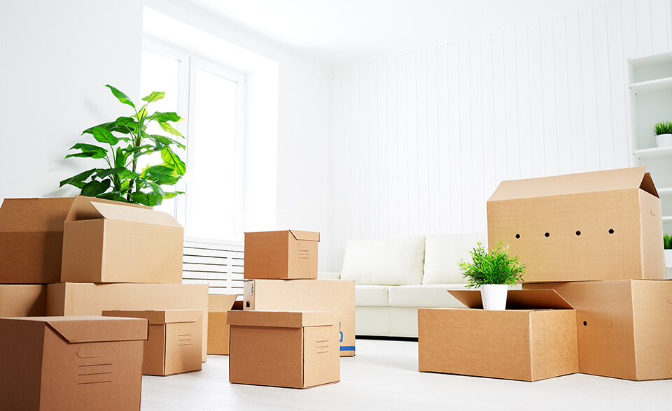 Labeled boxes, plants, and a couch