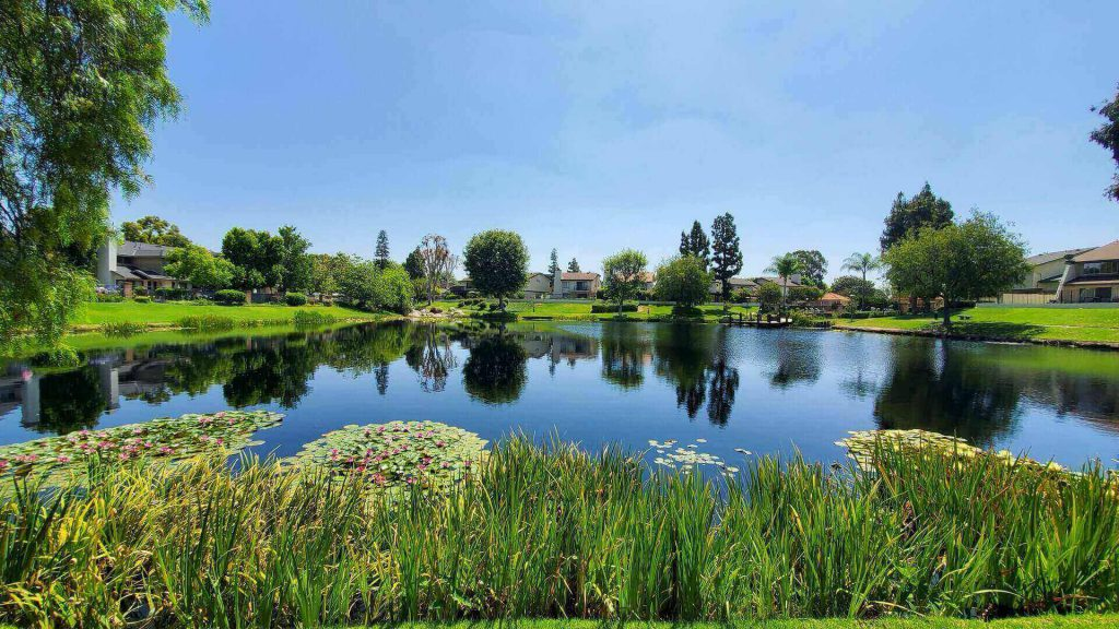 Beautiful pond surrounded by greenery