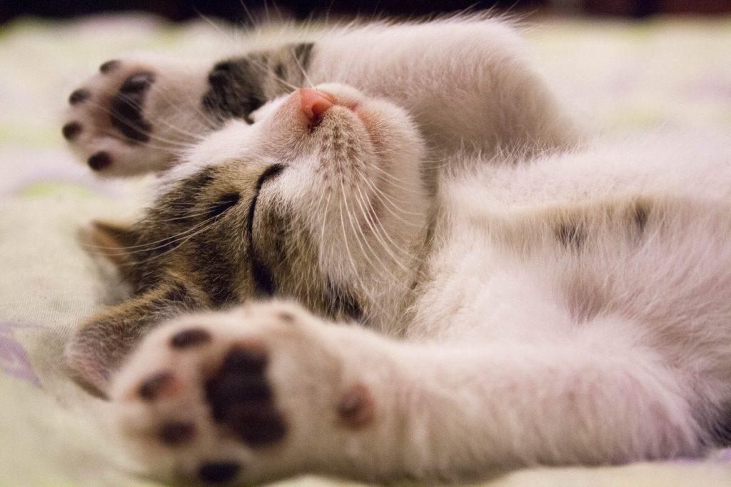 A cat laying around