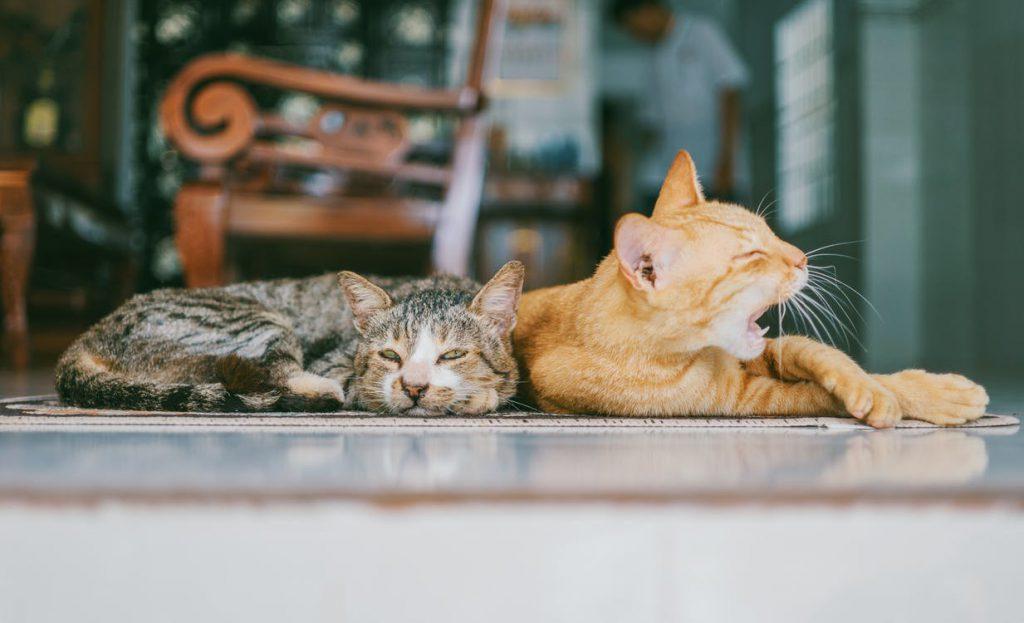 Felines laying on the floor