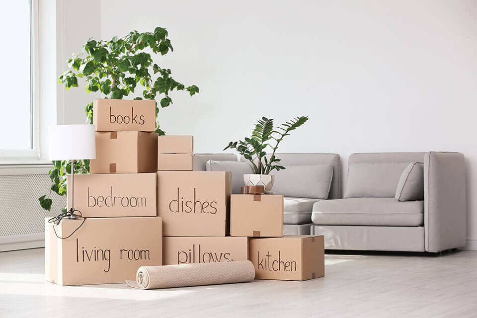 Pile of packages, plants, and a couch